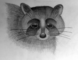 Racoon by MissCreamBerry
