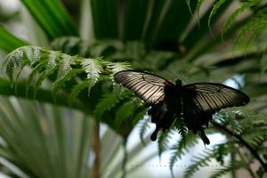 Butterfly 14 by andras120