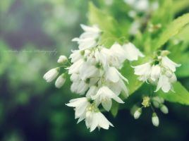 Fresh White Flowers by SharingMyDreams