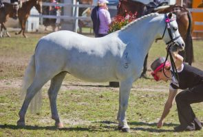 STOCK - Canungra Show 2012 103 by fillyrox