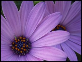 Terrace - Recursive Daisy by michelv