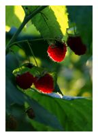 Raspberries by positively