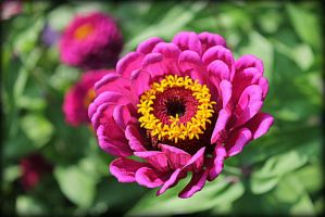 Flower Close-up by TMCBNYPhotos