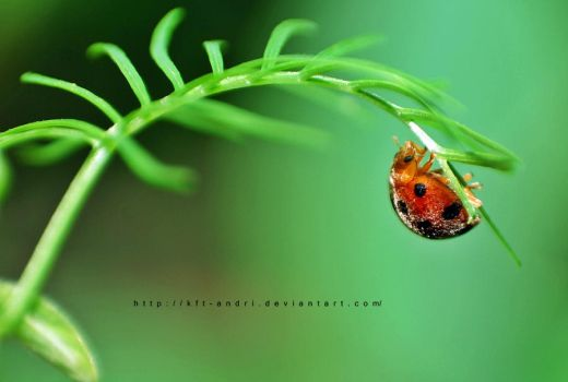 little lady bugs by KFT-Andri