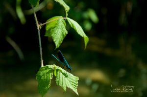 Fairy and a  Leaf by LuanaRPhotography