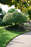 DSC 0107 Hever Castle Topiary 2 by wintersmagicstock