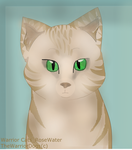 Warrior Cats_Rosewater by TheWarriorDogs