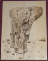 Elephant Woodburning 01 by MontanaJohnsons