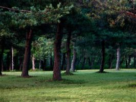 Trees by LucieG-Stock