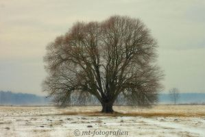 beautiful trees 17 by MT-Photografien