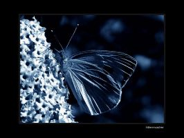 Butterfly kiss by Nile-Paparazzi