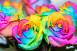 Rainbow Roses by wabbytwax