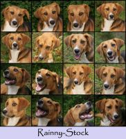 Doggy Faces- STOCK by Rainny-Stock