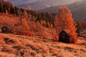 Colors of autumn. by lica20