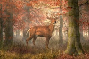 Fall Buck by deskridge