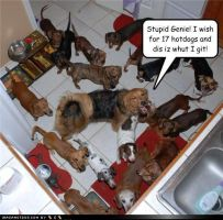 Funny pet pictures by caitlyn1217