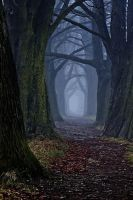 The dark forest path by DjLuke9