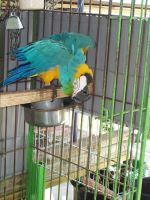Macaw 01 by dlc-nature-stock