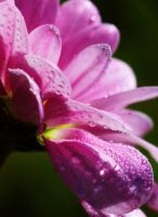 Flowers with Water Drops 1 by a6-k