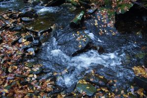 River in October by Grayash9755