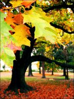 Autumn leaves by ulyce