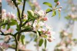 Blossom 4 by Janine-Autumn