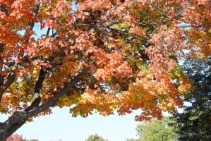 2014 Natural Autumn Color 26 by Miss-Tbones