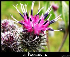 .: Passion :. by jibirelle