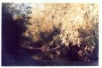 golden willow by andrewpershin