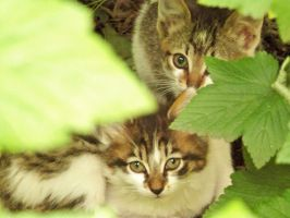 Cats - In my garden by Odessa-Himijo