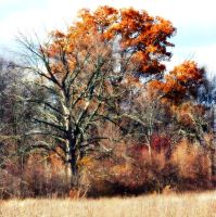 Shades of Autumn 18 by MadGardens