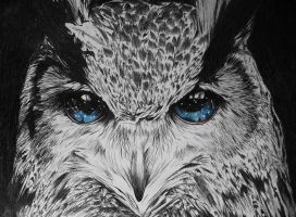 The Owls Are Not What They Seem - #1 by jellehavermansart