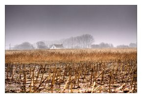 bucolique II by rhipster