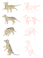 Thylacine Sketches 2 by MathiasKaizer