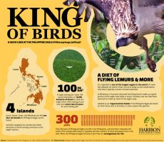Philippine Eagle Infographic by Filipeanuts