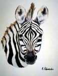 Zebra Foal by BrazenDesign