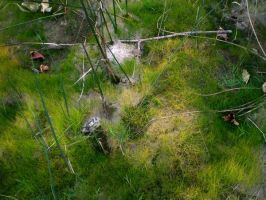 Grass 4 by Pistol-Whipped-Sar