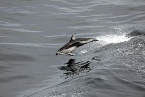 Porpoise 2 by broadwaylover1