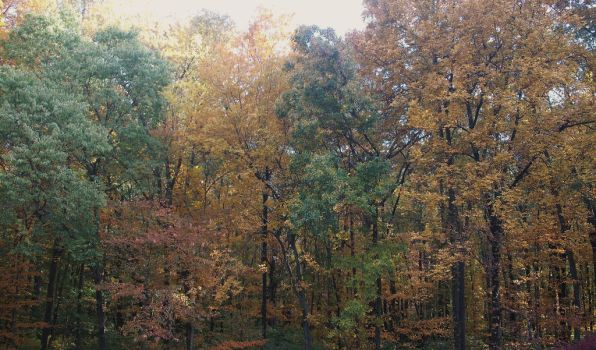 Fall Trees by almosthuman75