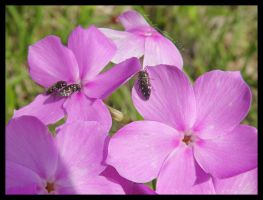 Tiny Nectar Sippers by Cillana