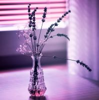 still life by malenka740715
