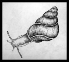 Snail-bait by Duckweed