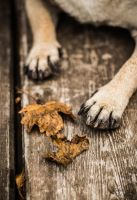Paws in autumn by Riderofthewind95