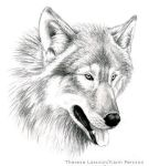 Wolf face by Gabonica