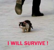 I WILL SURVIVE by 4eburashka