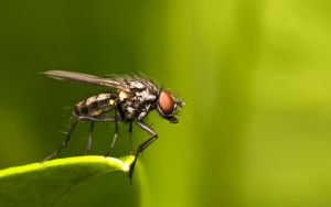 Fly No.764532 by jsz