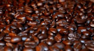 Komodo Beans by coffeenoir