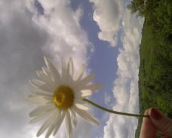 Send me a flower by long-day-at-school