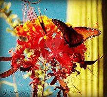 Butterfly_Cactus by khill-3
