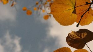 leaves in the sun by entartet